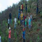 Plan Ave Fénix organizará última jornada de siembra por 2018