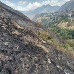 """Programa """"Colinas más Verdes"""" busca recuperar zonas quemadas por incendios"""