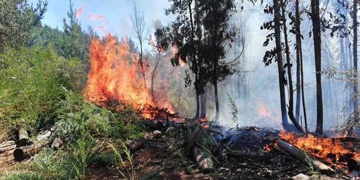 Alerta roja en Cali: altas temperaturas podrían generar incendios forestales