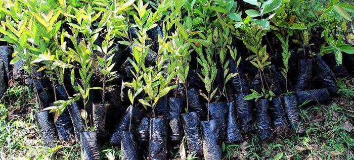 Ave Fénix y 10K Verde de Juancho Correlón se unen para la siembra de árboles