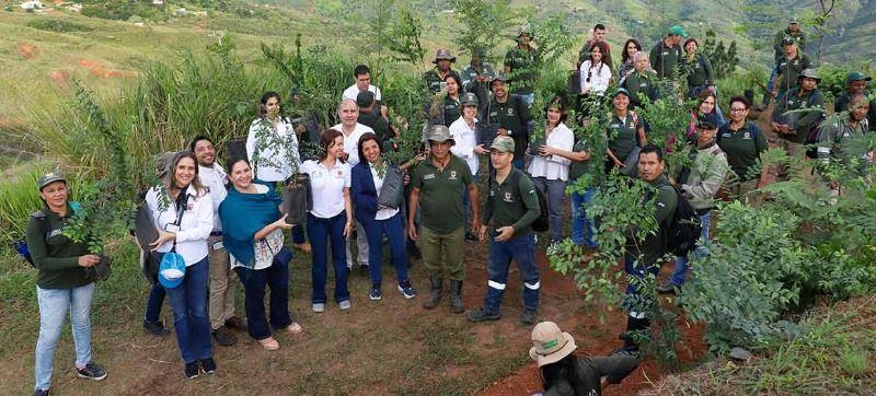 Más de 13 mil árboles plantados han permitido recuperación de Cristo Rey