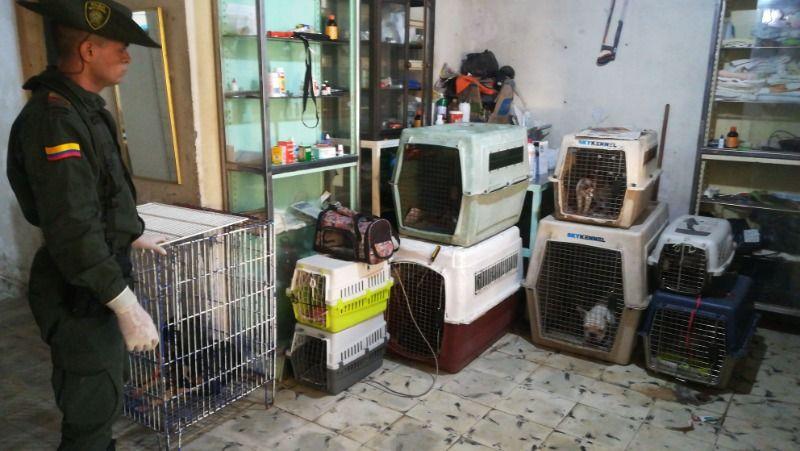 Ponen a salvo a 36 animales domésticos hallados en clínica veterinaria ilícita