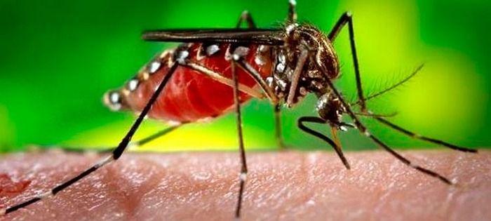 Dengue: Urgencia epidemiológica en el Valle