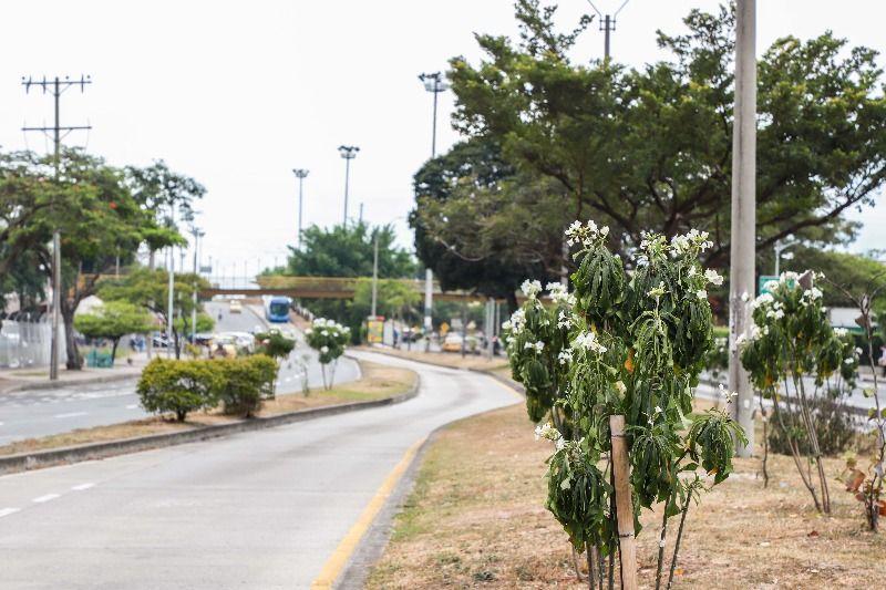 """Sembrando amor por Cali"" recupera zonas verdes"