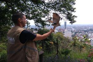 Dagma liberó a 10 animales silvestres en el ecoparque Bataclán