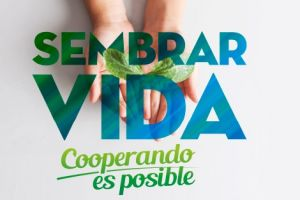 Coomeva promovió siembra de árboles en el Parque Nacional Natural Farallones