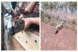 Liberadas más de 190 especies animales silvestres y exóticas de Villa Lorena