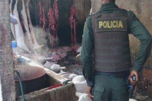 Clausurado matadero ilegal de cerdos en el Jarillón del río Cauca