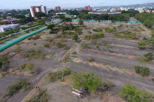 Concejo pedirá a Corte Constitucional revisar arboricidio en parqueaderos de Plaza de Toros