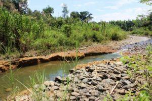Concejal solicitará a la Procuraduría Ambiental investigue lo que ocurre en Pance