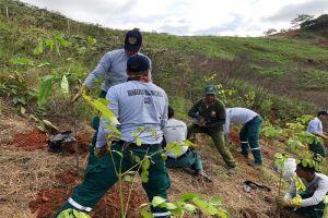 Plan Ave Fénix: Plantados 800 árboles en el cerro de Cristo Rey