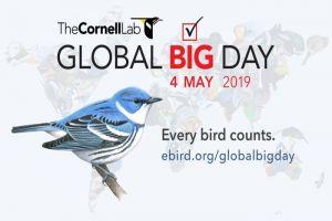 Más de 700 especies se avistaron en el Valle durante el Global Big Day