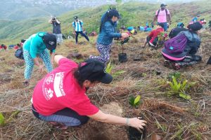 Tres mil árboles se plantaron en cerro de Cristo Rey