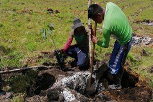 Siembra de aguacate Hass congrega producción, reincorporación y transformación