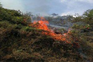 Serán recompensados quienes denuncien a responsables de incendios forestales