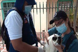 Vacunación gratuita para animales de compañía