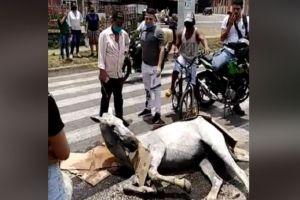 Judicializado ciudadano que maltrató a un equino en Cali